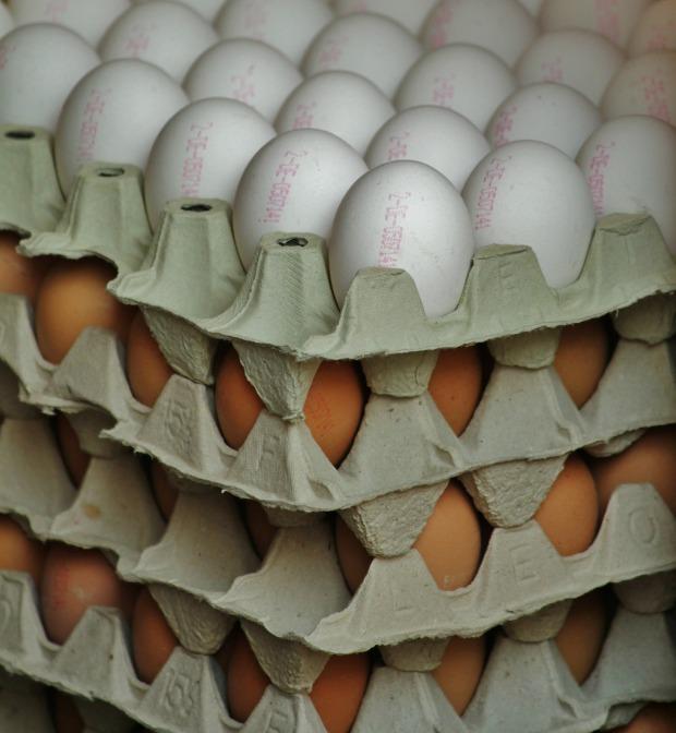 egg-379406_1920