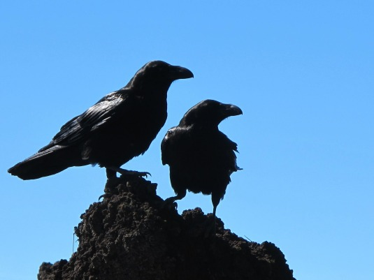 birds-433965_1920